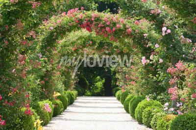 Carta da parati Arco della Rosa nel giardino