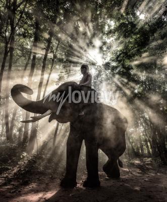 Quadro Mahout a Surin Province Thailandia elefante
