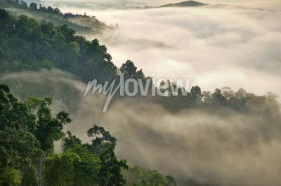 Carta da parati Nebbia nebbiosa sulla montagna nella foresta tropicale