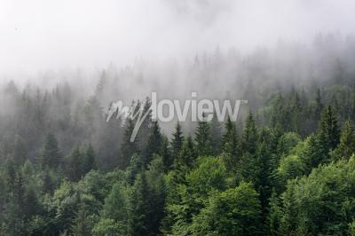 Carta da parati Panoramica forestale sempreverde