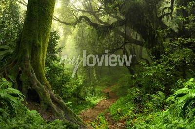 Carta Da Parati Foresta Tropicale : Foresta pluviale tropicale carta da parati u2022 carte da parati