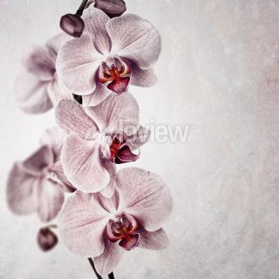 Carta da parati Una delicata orchidea rosa su uno sfondo di stile d'epoca sbiadito