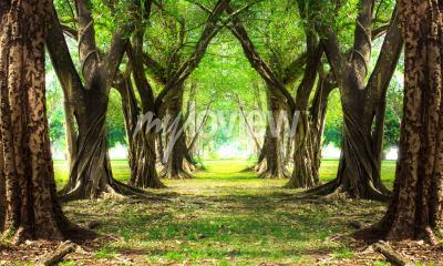 Carta da parati Verde foresta magica