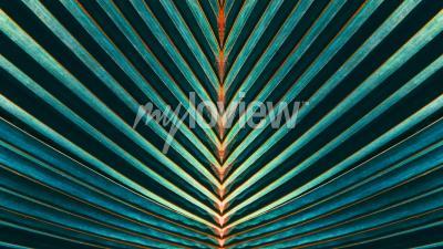 Carta da parati Striato di foglia di palma
