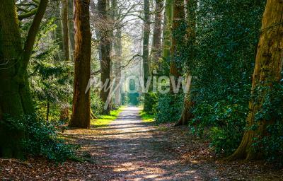 Carta da parati Paesaggio forestale