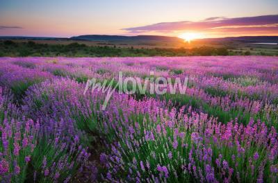 Carta da parati Meadow of lavender
