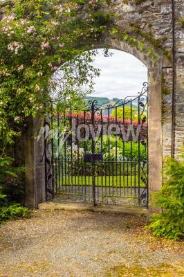 Carta da parati Beautiful old garden gate covered with green ivy