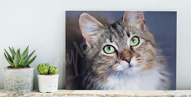 Quadro animali domestici gatto