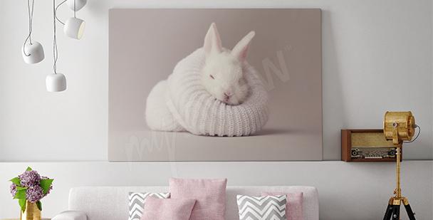 Quadro coniglio bianco