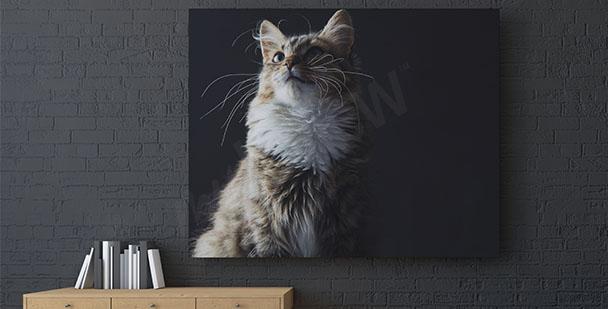 Quadro gatto su sfondo nero